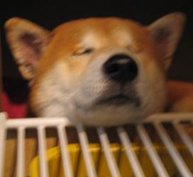 微睡む健太郎