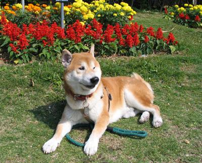 花壇の前の健太郎