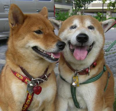 健太郎と紅
