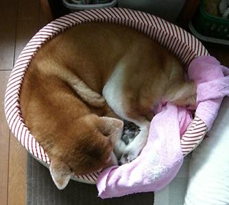 紅のベッドで健が寝る