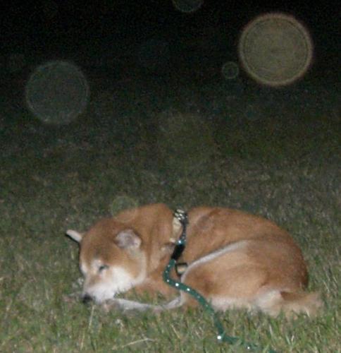 謎の球体ズーム