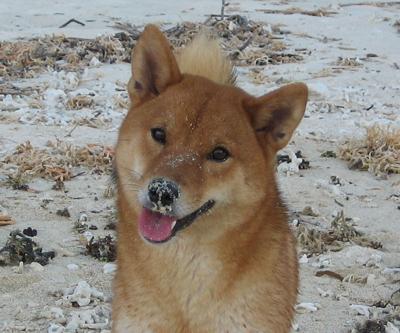 砂まみれの紅の鼻面