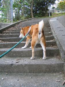 階段で体力