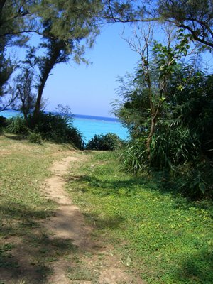 ビーチに出る階段手前からの風景