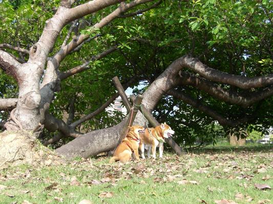 根元から横倒れになった樹木