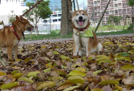 季節はずれの落ち葉の上で