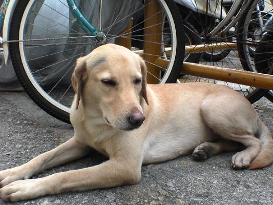 迷子の犬2