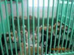 捕獲された犬達2