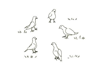 鳩さんたち