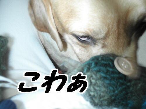 ciaoobu376-12-15.jpg