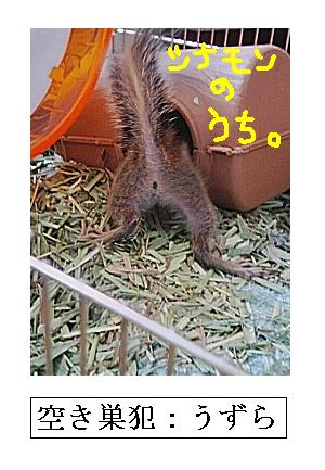 akisuuzu.jpg