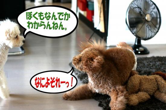 12_20080815165726.jpg