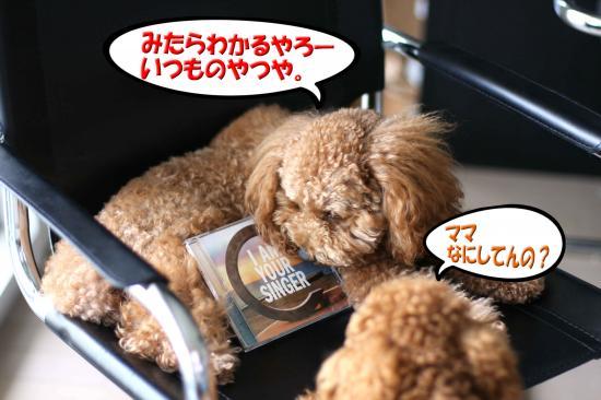 5_20080812171923.jpg