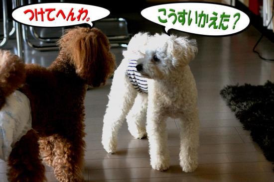 7_20080815164440.jpg