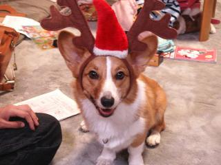 うりちゃん♪クリスマスバージョン