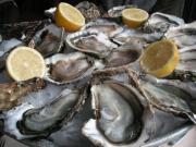 新鮮な牡蠣山盛り