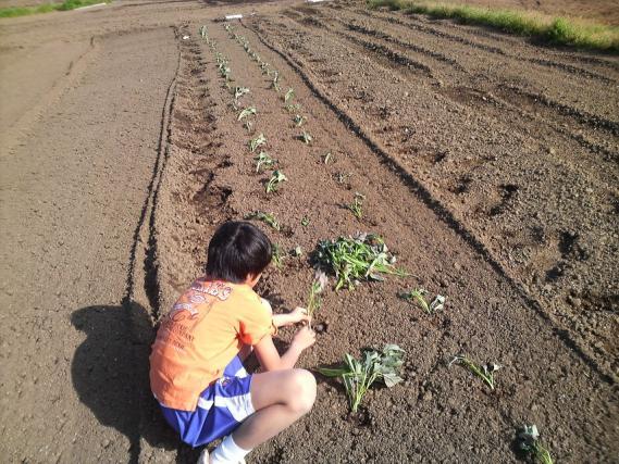 野菜101