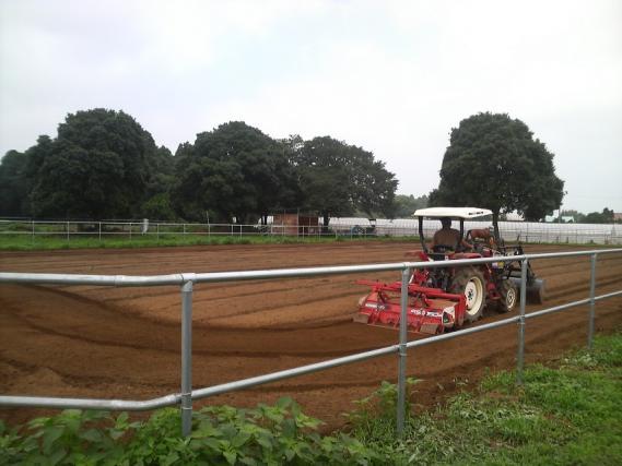馬場の雑草2