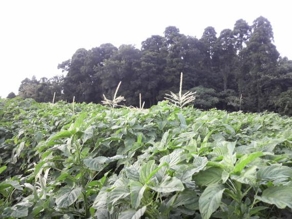 野菜154
