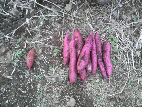 野菜188