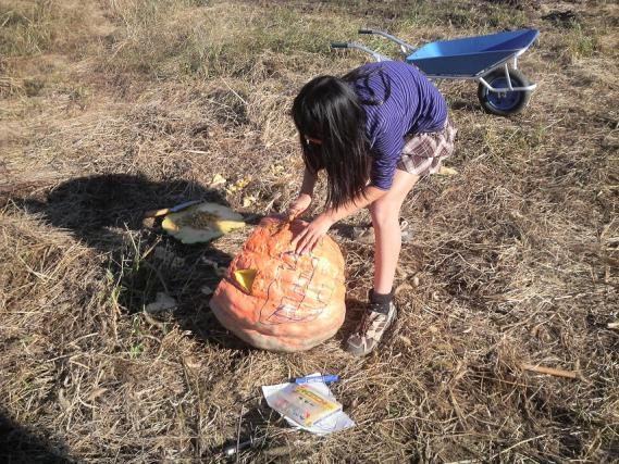 Pumpkin2_20101103184300.jpg