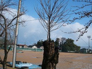 樹木の生命力