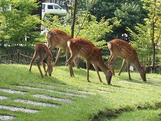 奈良ホテルの鹿さんたち
