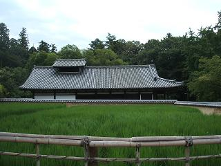 東大寺の田
