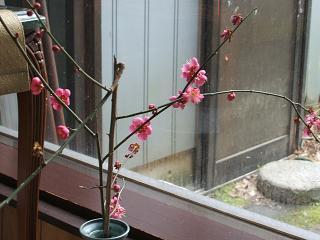 庭の桃の枝