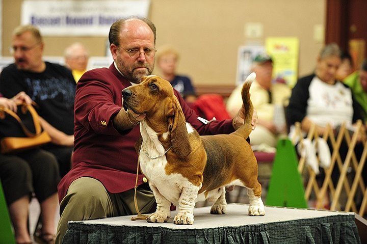 Basset_Hound_Club_of_America_Nationals_Texas_2008_(278).jpg