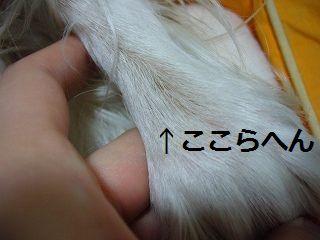 zdz014_20110117092948.jpg