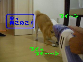 SANY3382_convert_20080919154211.jpg