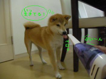 SANY3384_convert_20080919154936.jpg