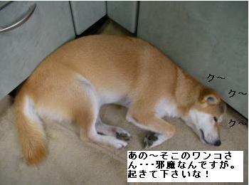 SANY3408_convert_20080919210855.jpg