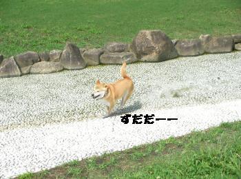 SANY3457_convert_20080920220224.jpg