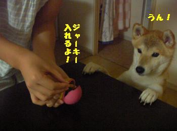 SANY3712_convert_20080924214228.jpg