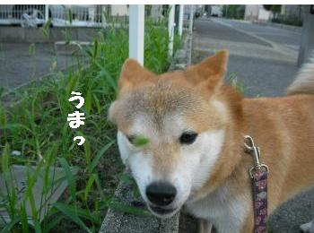 SANY4431_convert_20081003203759.jpg