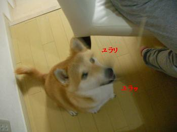 SANY4485_convert_20081007200558.jpg