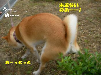 SANY4533_convert_20081005201544.jpg