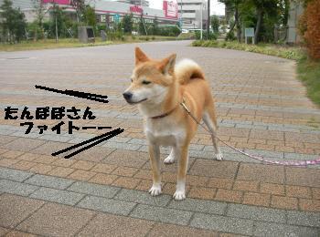 SANY4536_convert_20081005201922.jpg