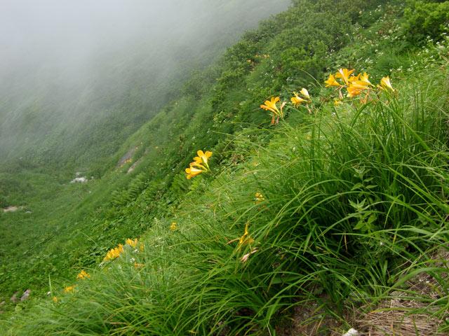 斜面に咲く花