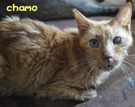 chamo