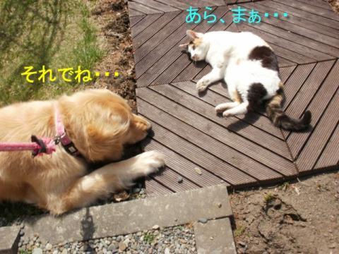 13_20100512195609.jpg