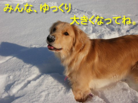 雪 外 055
