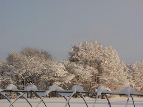 大雪すずめ 021
