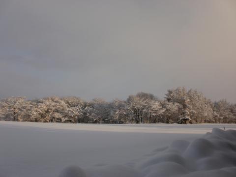 大雪すずめ 003