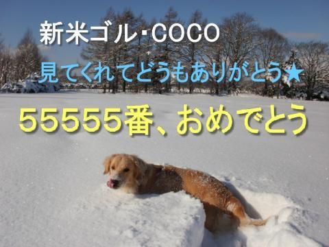 55555 ありがとう!
