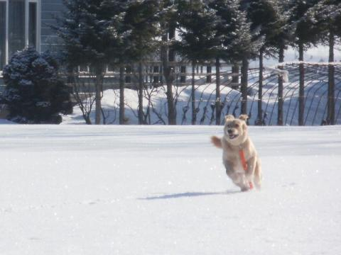 新雪 1730000