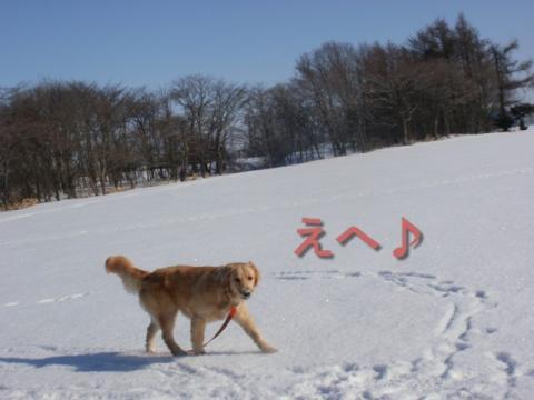 新雪 191