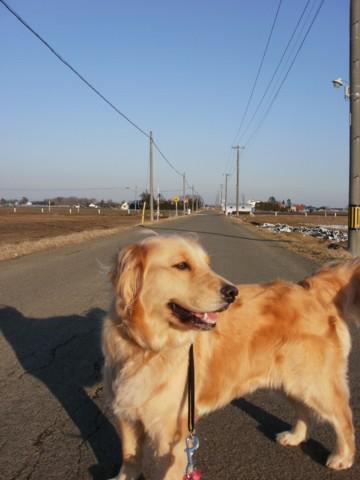 ココ散歩 005
